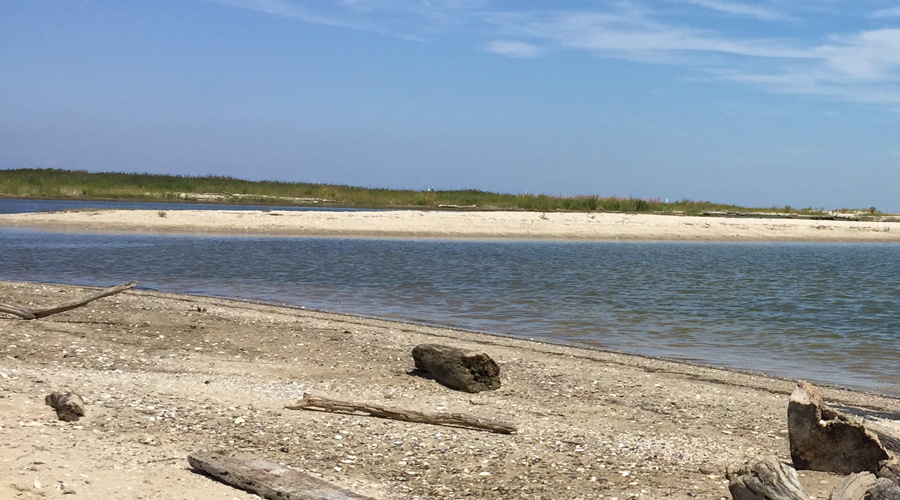 Swim, Hunt for Fossils, and More at this Calvert County Park